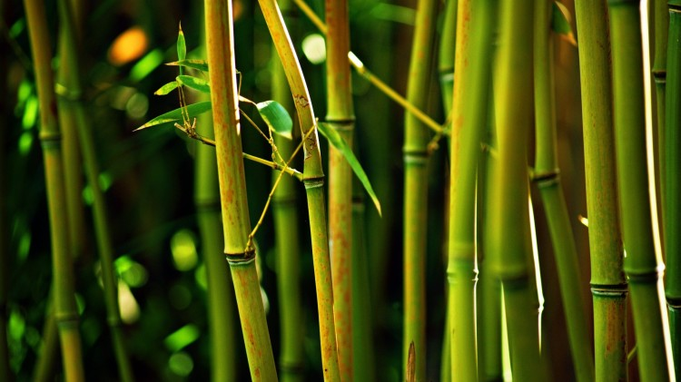 bamboo-tree-glowing-2560x1440-and