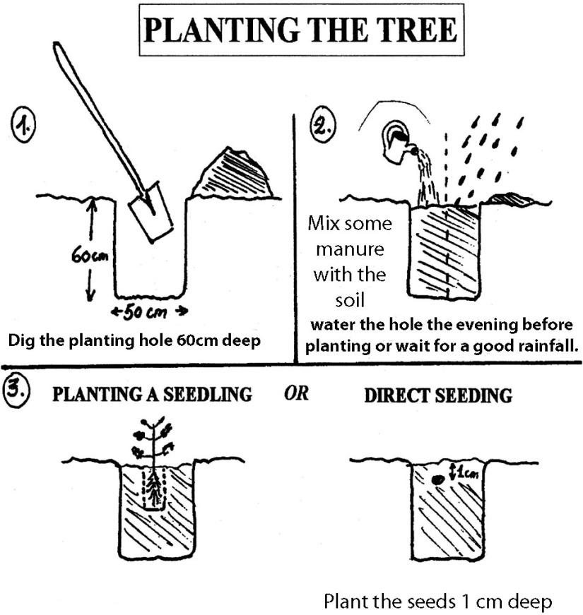plant-grow-cultivate-moringa